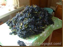 сохранить виноград свежим 1