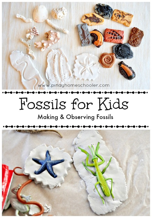 Fossils PIN