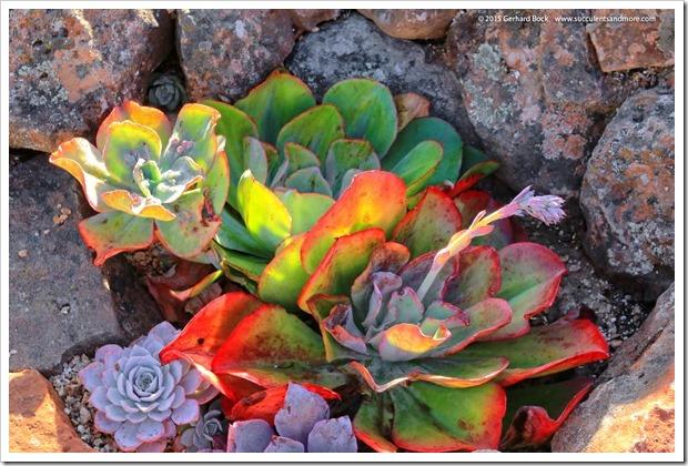 150926_SucculentExtravaganza_146