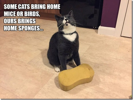 funny-cats-038