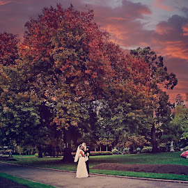 Autumn Tree at Sunset by Alan Evans - Wedding Bride & Groom ( julie, aj photography )