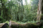 Xumeni Forest