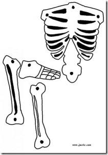 esqueleto 5 (2)
