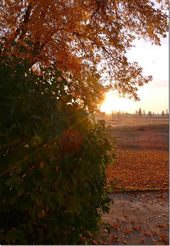 fall 005