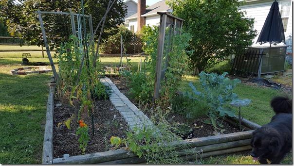 Garden 06 (17)