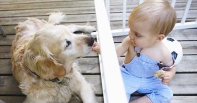 Convívio com cachorros diminui o risco de asma em crianças