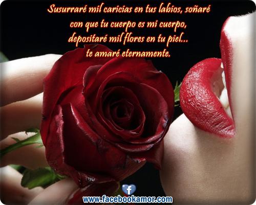 Imagenes De Rosas Rojas Con Frases - Imágenes de Amor: 7 imagenes de regalos de rosas rojas y