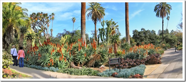 141227_Huntington_aloe_pano