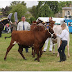 cattle02.jpg