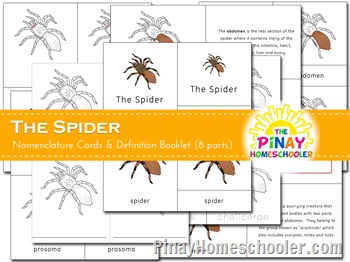 The Spider Nomenclature Cards