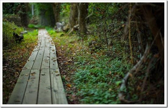 Тропинка, дорога, лето, лес, природа, растения, красота, 1920x1200