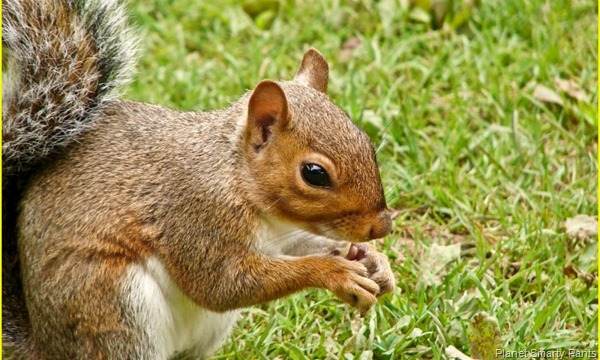 Math for Fast Finishers: Squirrels and Acorns