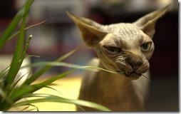 gatos divertidos buscoimagenes (14)
