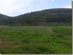 20150615_viheyards on korcula (Small)