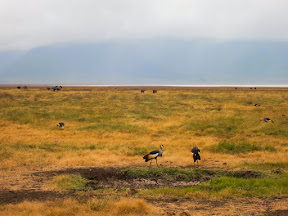 There was actually a whole group of those birds, with a group of ostriches behind them in the background.