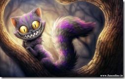gatos divertidos buscoimagenes (18)