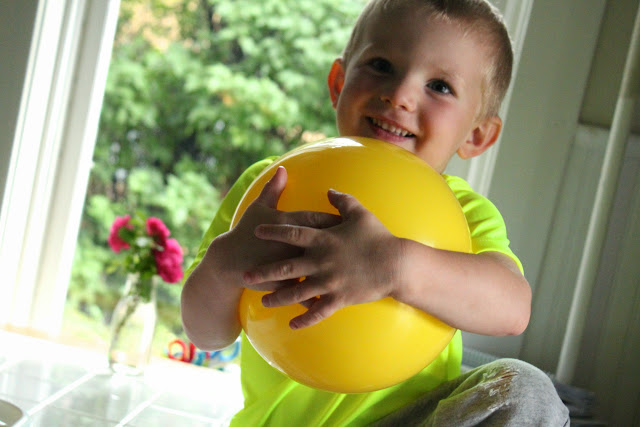 Bo loves his yellow ball