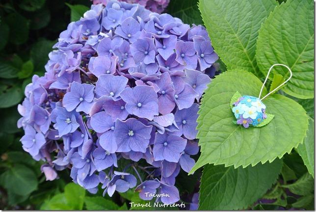 陽明山繡球花 (53)