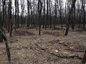 лес15.jpg