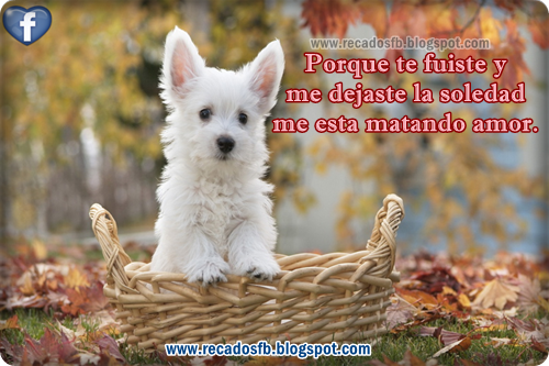 Imagenes de Amor Imagenes de Amor Amistad Tierna  - Imagenes Con Frases De Amistad Para Facebook