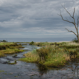 by Carlos Costa - Landscapes Weather ( water, sky, tree, green, death, dramatic )