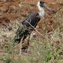 Bishop Stork