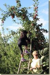 Ally Ladder