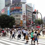 shibuya crossing by day in Shibuya, Tokyo, Japan
