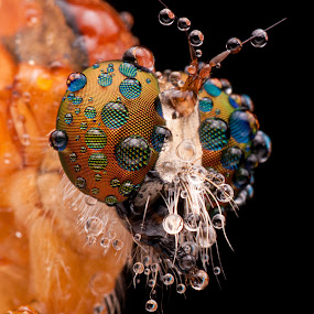 robber eye III by Ak Pak Belang Sopan - Animals Insects & Spiders