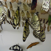 Houston Museum of Natural Science - 116_2868.JPG