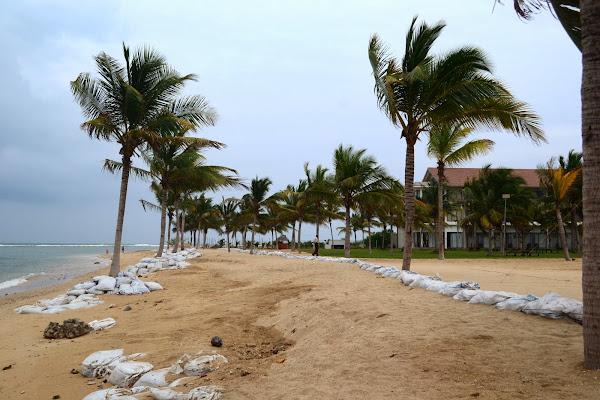 Пальмы вдоль пляжа Пассекудах, Шри Ланка