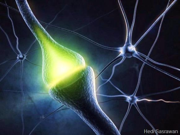 fungsi sinapsis