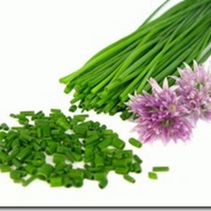 Hạt giống hành tăm - Allium Schoenoprasum
