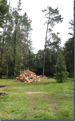from a distance, a huge pile of firewood