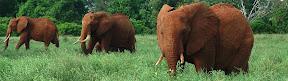 Elephants hiding in the grass!