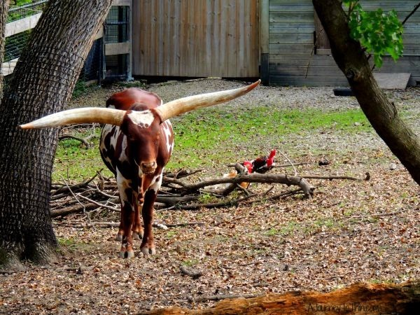 Look at those horns