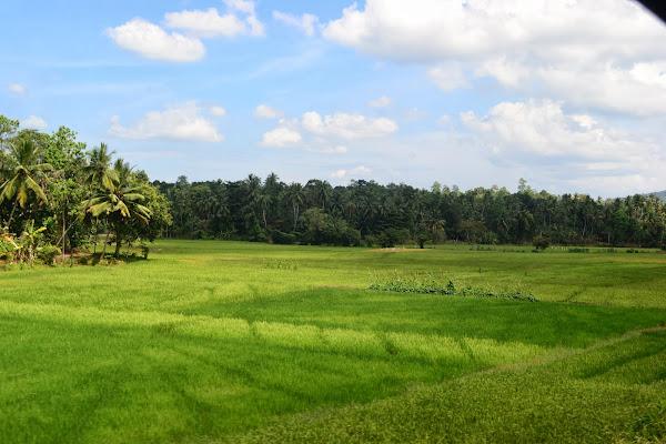 Поля и деревья, Шри Ланка