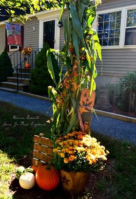 fall cornstalks