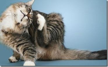 gatto prurito