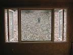 Master BR window 6/24