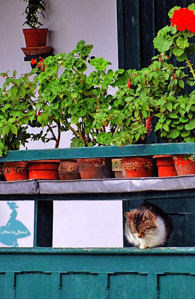 pisica manastirea suzana