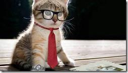 gatos divertidos buscoimagenes (6)
