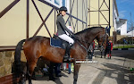 орлово конный парк русь фото
