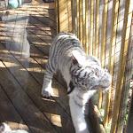 TIGERS Preservation Station - Myrtle Beach - 040510 - 02