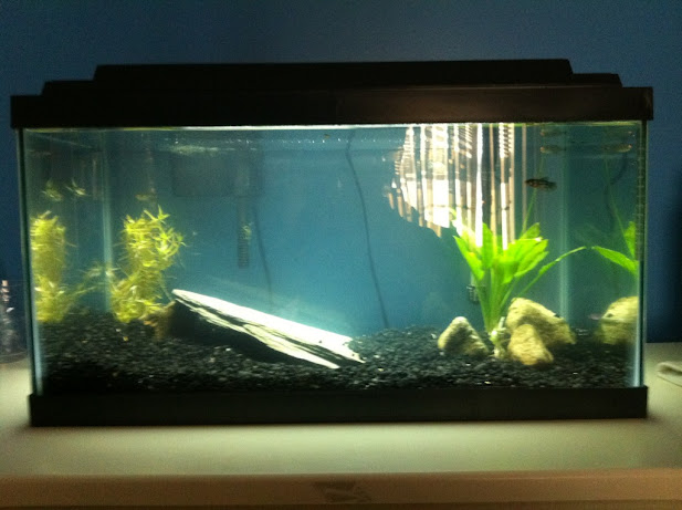 Image of a fish tank installed