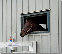 KY horse park 038