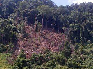 Hutan ku Sayang Hutan ku Malang