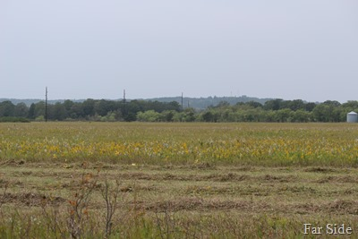 Smoky Hill Tower in the distance
