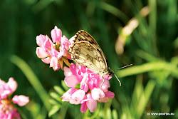 V  Národní přírodní rezervace Úhošť  se vyskytují vzácných teplomilných rostliny.
