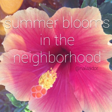 summer-flowers-blooming